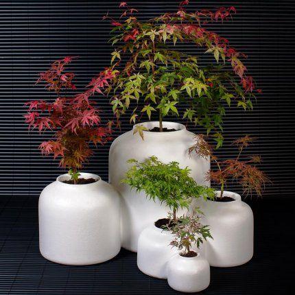 Un jardin japonais dans un seul pot Jardins, Plantes et Japonais - petit jardin japonais interieur