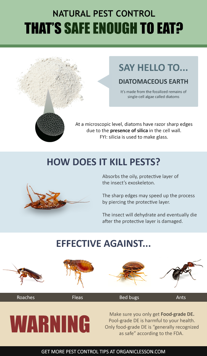 Diatomaceous Earth Food Grade Benefits & Uses incl. Pest