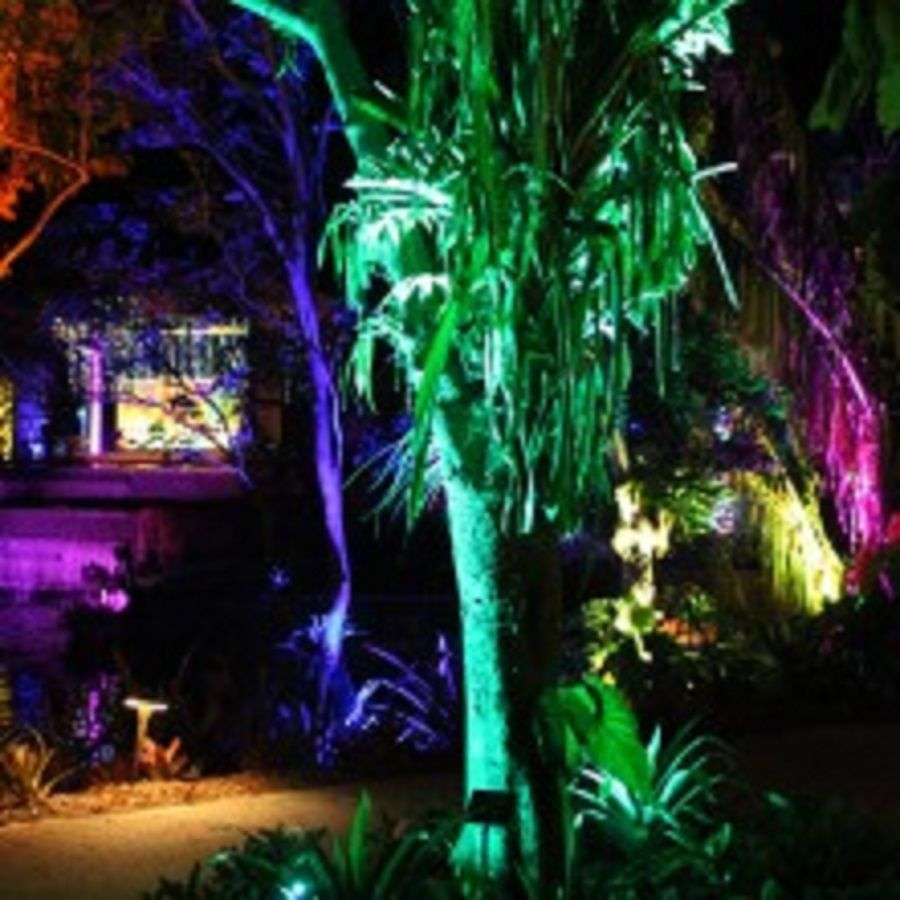 Night Lights in the Naples Botanical Garden Botanical