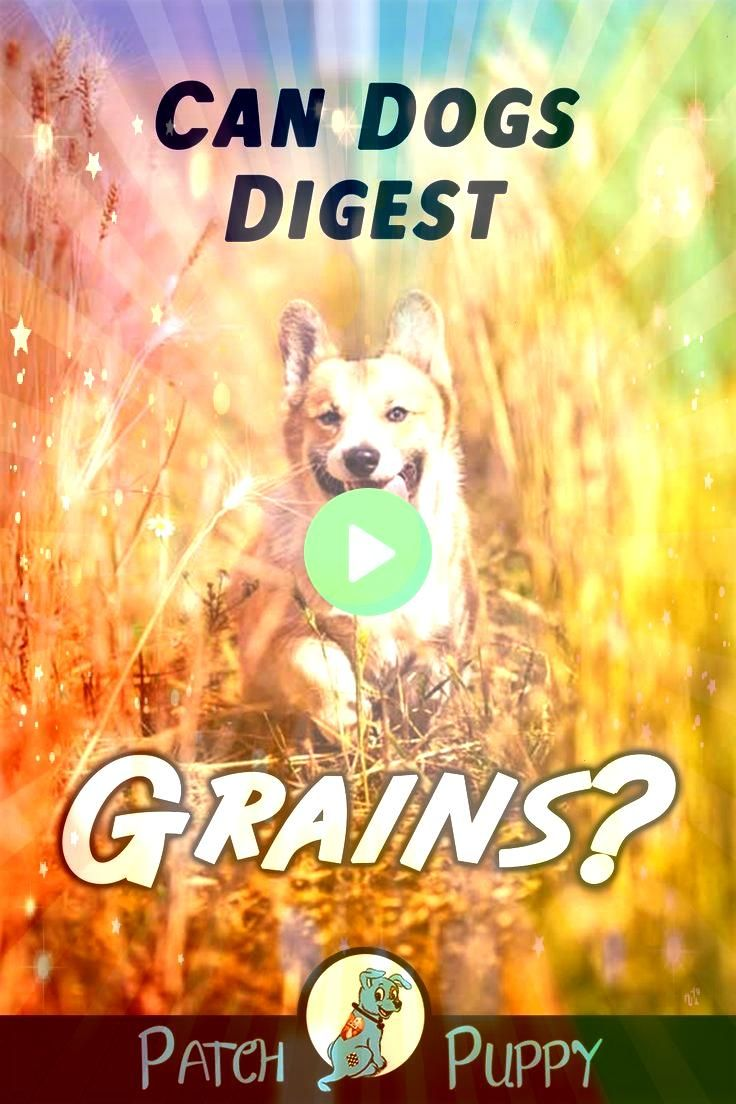 Dogs Digest Grains 5 Grain Free Dog Food MythsCan Dogs Digest Grains 5 Grain Free Dog Food Myths Cute Kitten Cute Kitten Kitten exploring her new world Winnies moves to U...