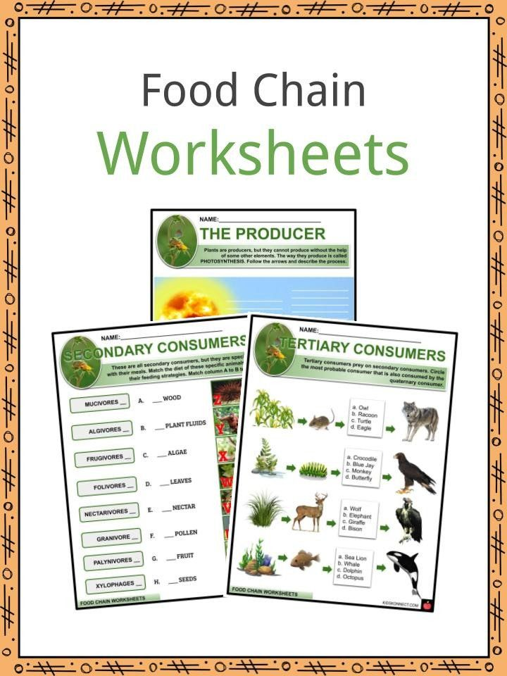 Free Printable Ecosystem Worksheets Food Chain Facts
