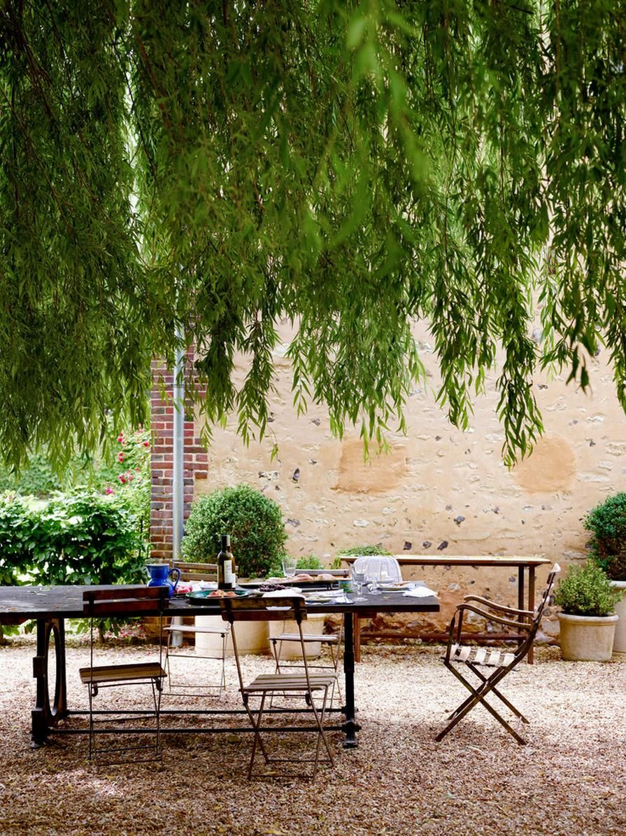 Fast-growing Shade Trees Make Statement
