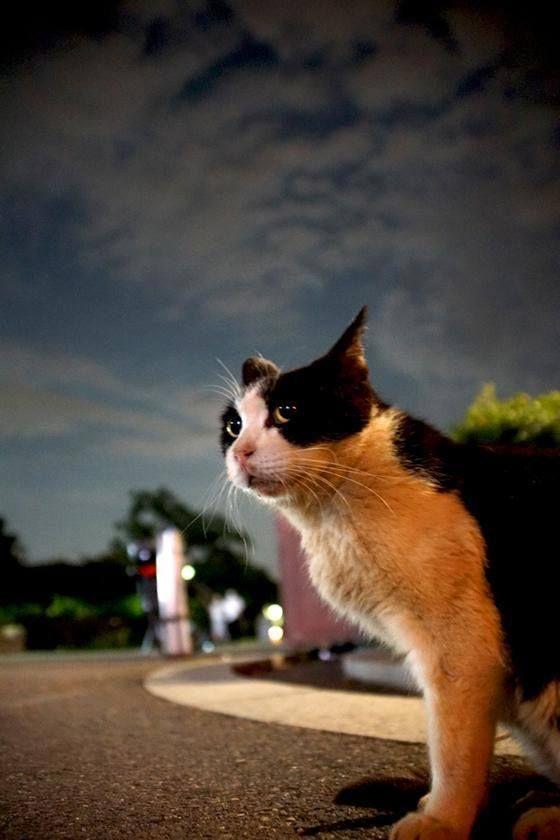 Katze Cat Chat Gatto *