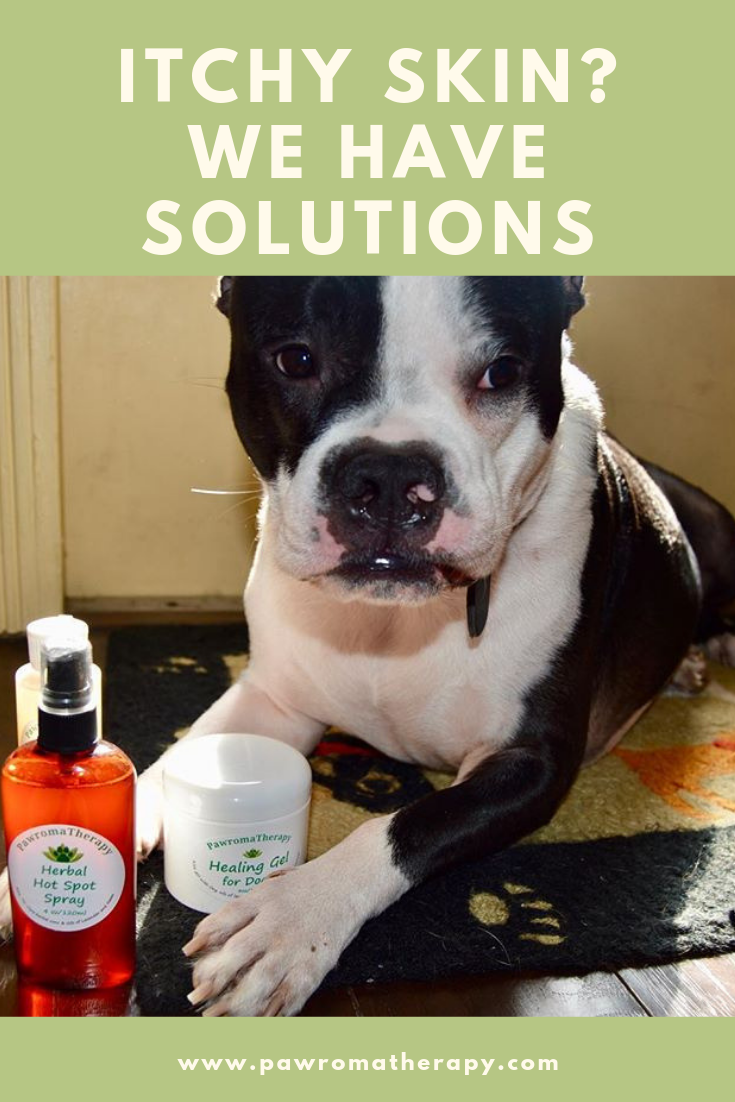 Is Your Dog Itching Is There A Rash Or Hairloss This Can Be Due To Allergies Infection Dry Skin And Many Other Con Dog Itching Holistic Pet Dog Allergies