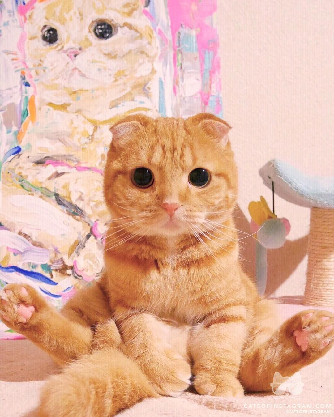 Cats Of Instagram On Instagram From Ashmiemu Same Pose Catsofinstagram Cute Cat Gif Funny Cat Videos Cats