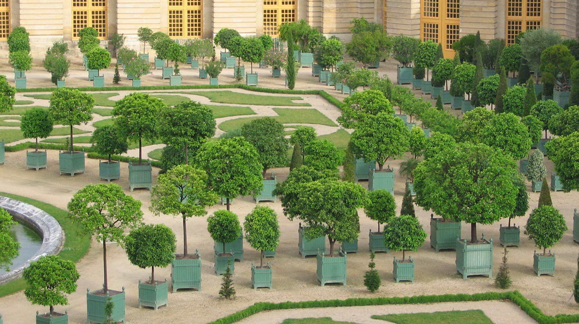 L 39 orangerie du ch teau de versailles original ch teau de versailles planters by jardins du roi for Jardin chateau de versailles