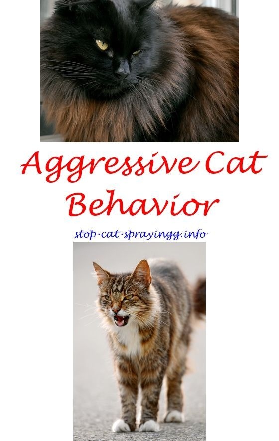 products to deter cats from urinating cat pee stop cat peeing