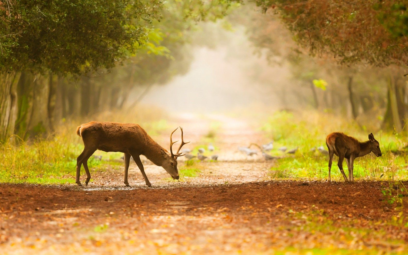 Deer HD Wallpapers Pictures Photos Background Images