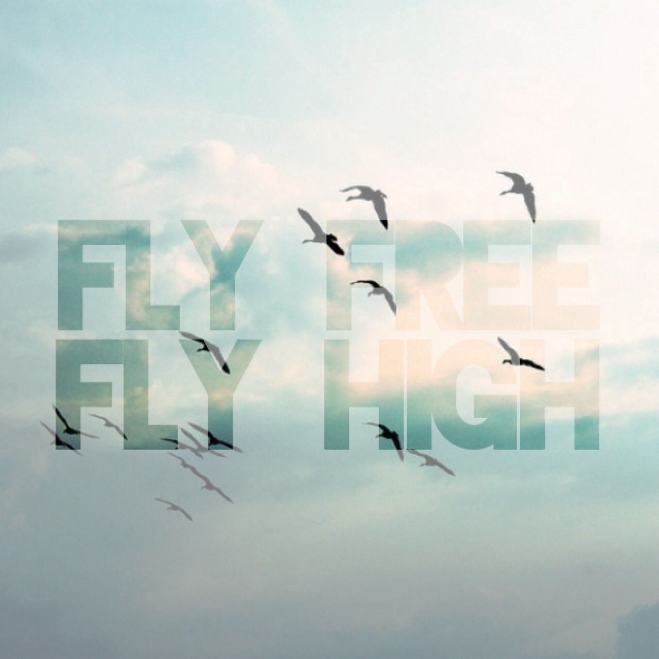 Fly Free Fly High Quotes Fly Quotes High Quotes Lyrics To Live By