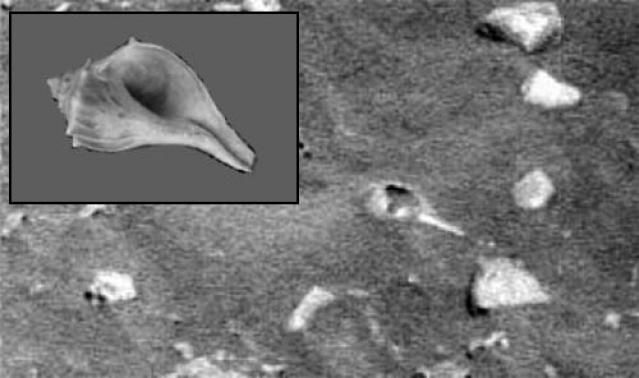 More anomalies spotted in Mars photographs - Unexplained ... |Mars Unexplained Anomalies