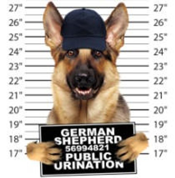 Dog T Shirt Cool German Shepherd Public T Shirt Mens T Shirts Dogs