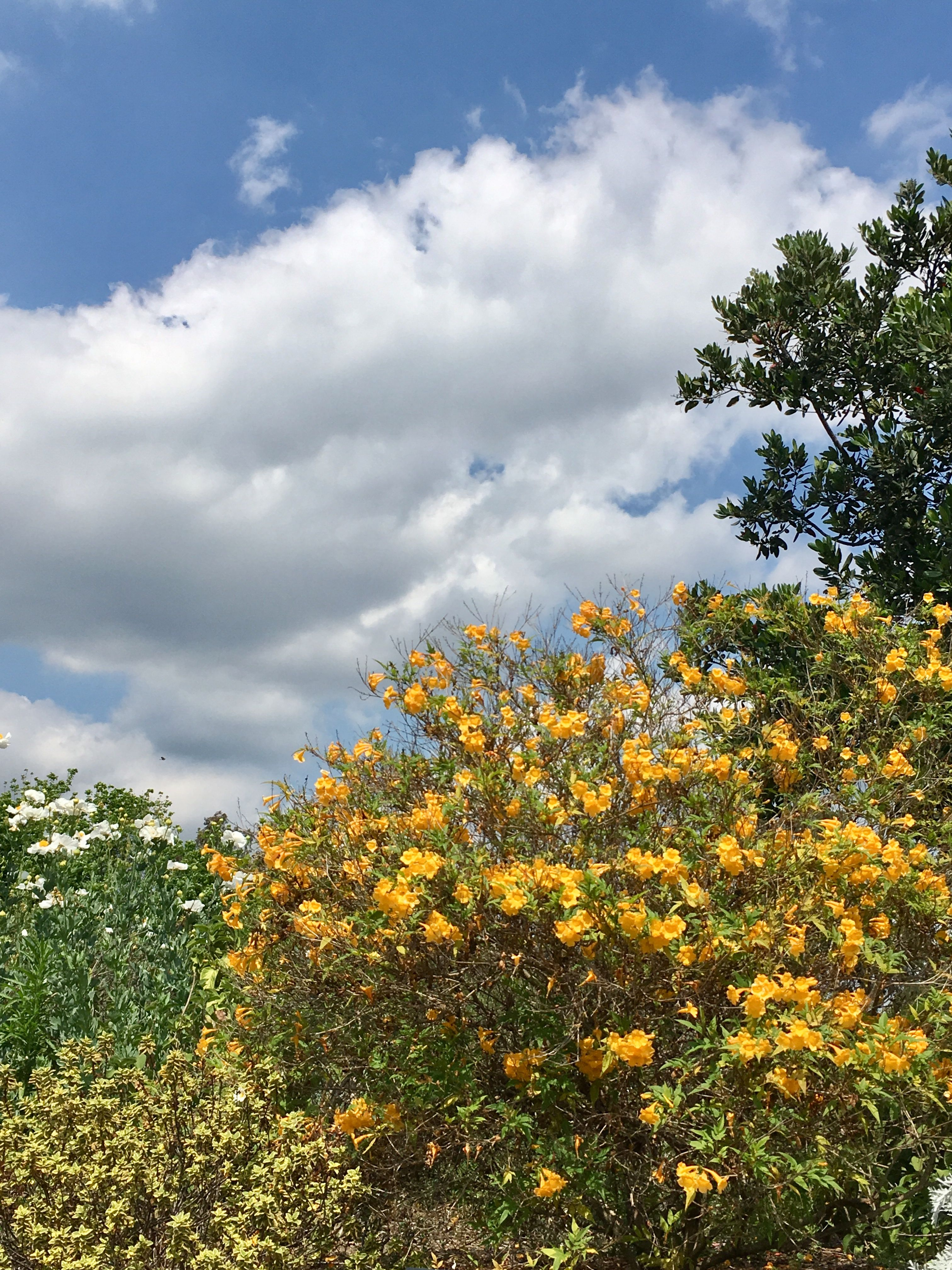Loved these colors against the cloud. Clouds, Bloom, Outdoor