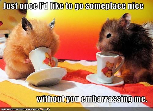 Embarrassing hamster
