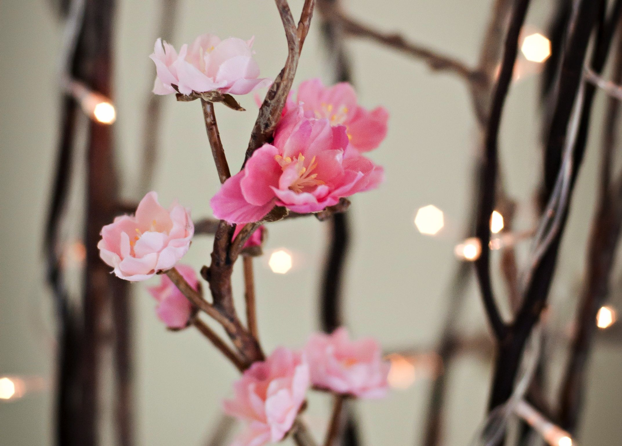Cherry blossom wedding decorations   GPT wedding   Pinterest