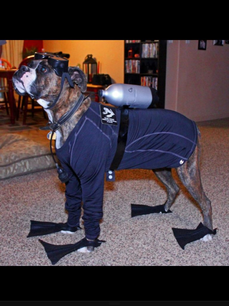 Navy Seal Boxer Boxer dogs, War dogs, Military dogs