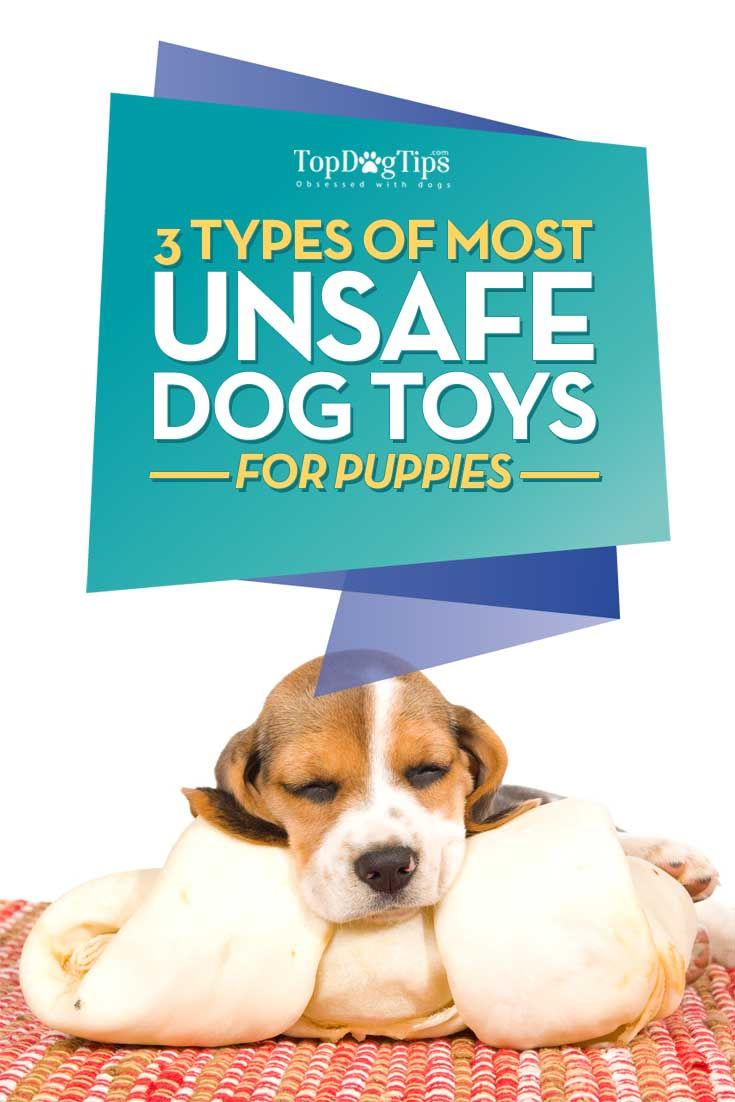 3 Types Of Most Unsafe Dog Toys For Puppies Dog Toys Puppy