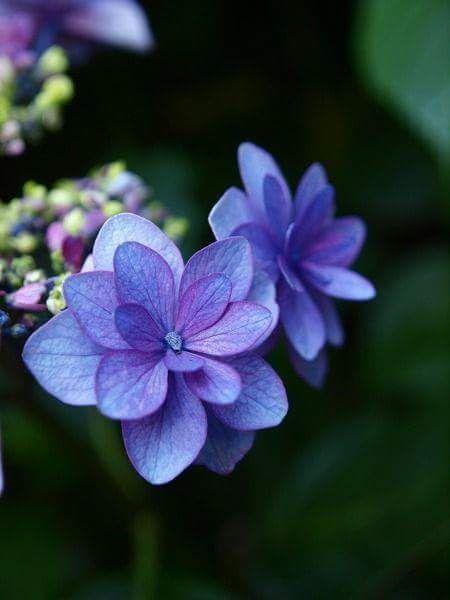 Maria Fiorotto1 Mariafiorotto1 Beautiful Flowers Purple Flowers Amazing Flowers