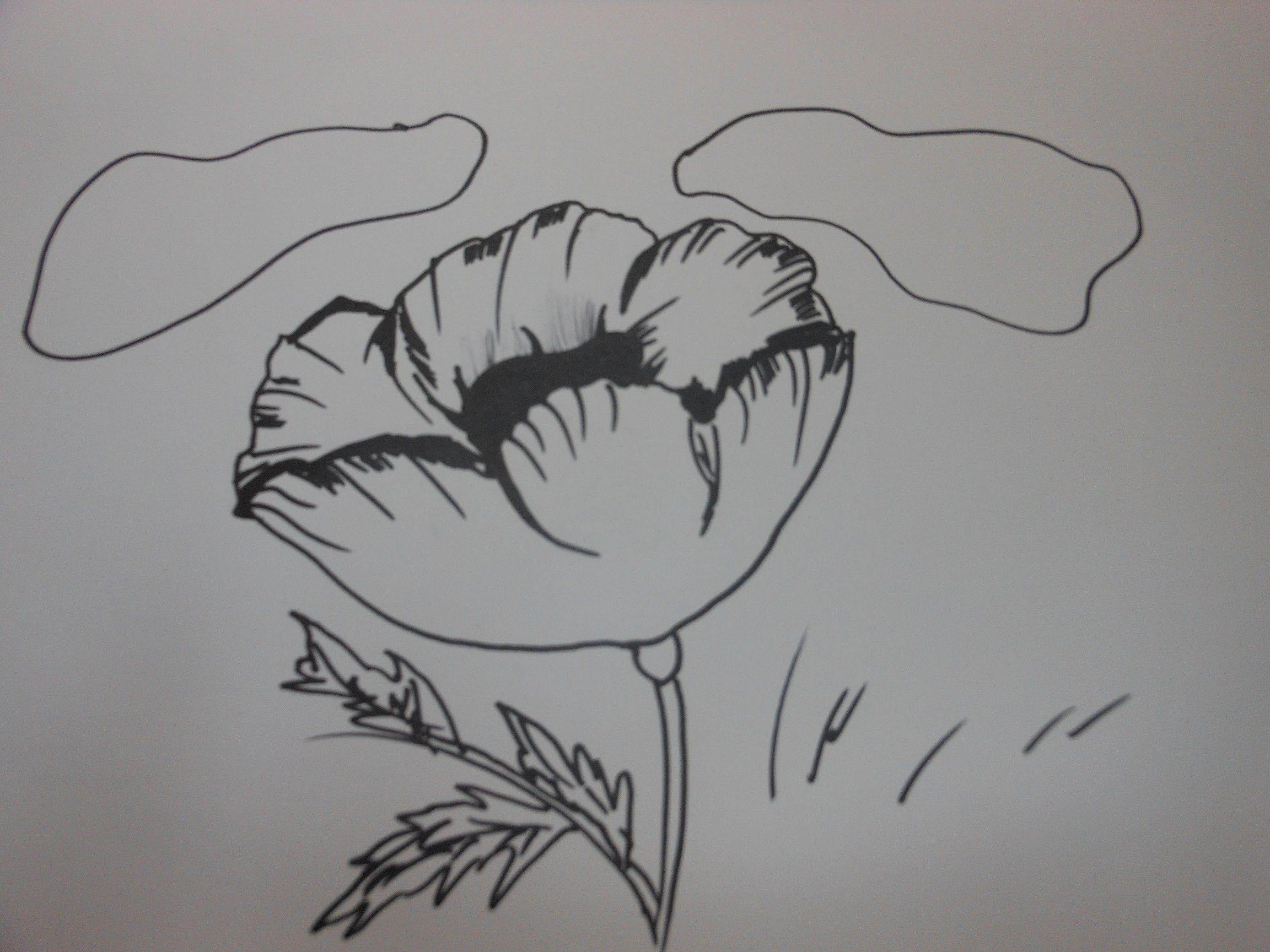 How to draw a poppy flower step by step tutorial videos how to draw a poppy flower step by step tutorial mightylinksfo