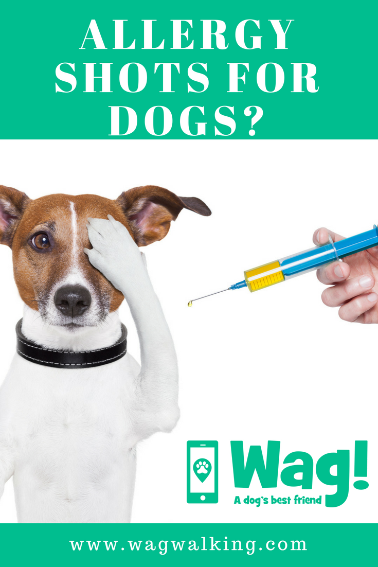 Allergy Shots For Your Dog Dog Allergies Allergy Shots Dog Health