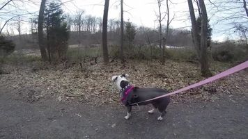 Why Does My Dog Freeze Or Suddenly Stop Moving During Walks Dogs Dog Behavior Dog Trainer