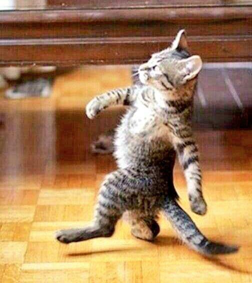 Strutting along. | Cats | Funny, Funny animal memes, Funny ...