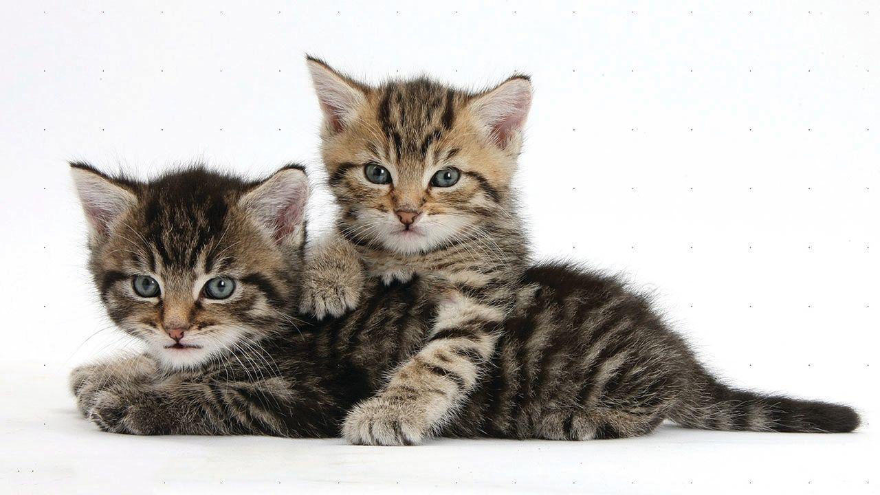 Cute Kittens Bite Each Other Kittens Cutest Kittens Cats And Kittens
