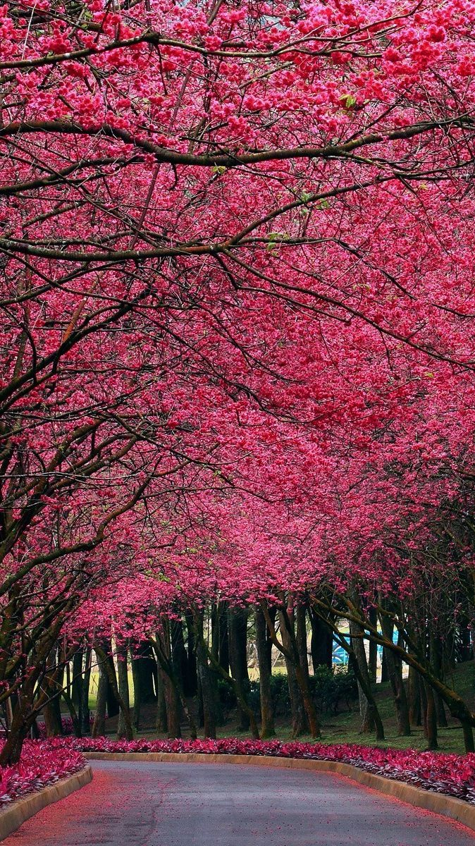 Pink-Flowers-Autumn-Trees-Park-iPhone-Wallpaper | iPhone Wallpapers ...