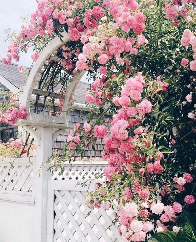 Serrurier Velizy Villacoublay dedans Épinglé par agi sur rose cottage | pinterest | rosier, jardins et