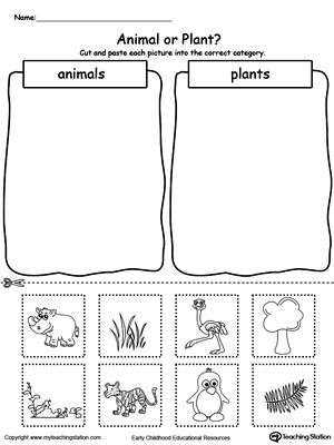 animal and plant sorting daycare science worksheets preschool science kindergarten worksheets. Black Bedroom Furniture Sets. Home Design Ideas