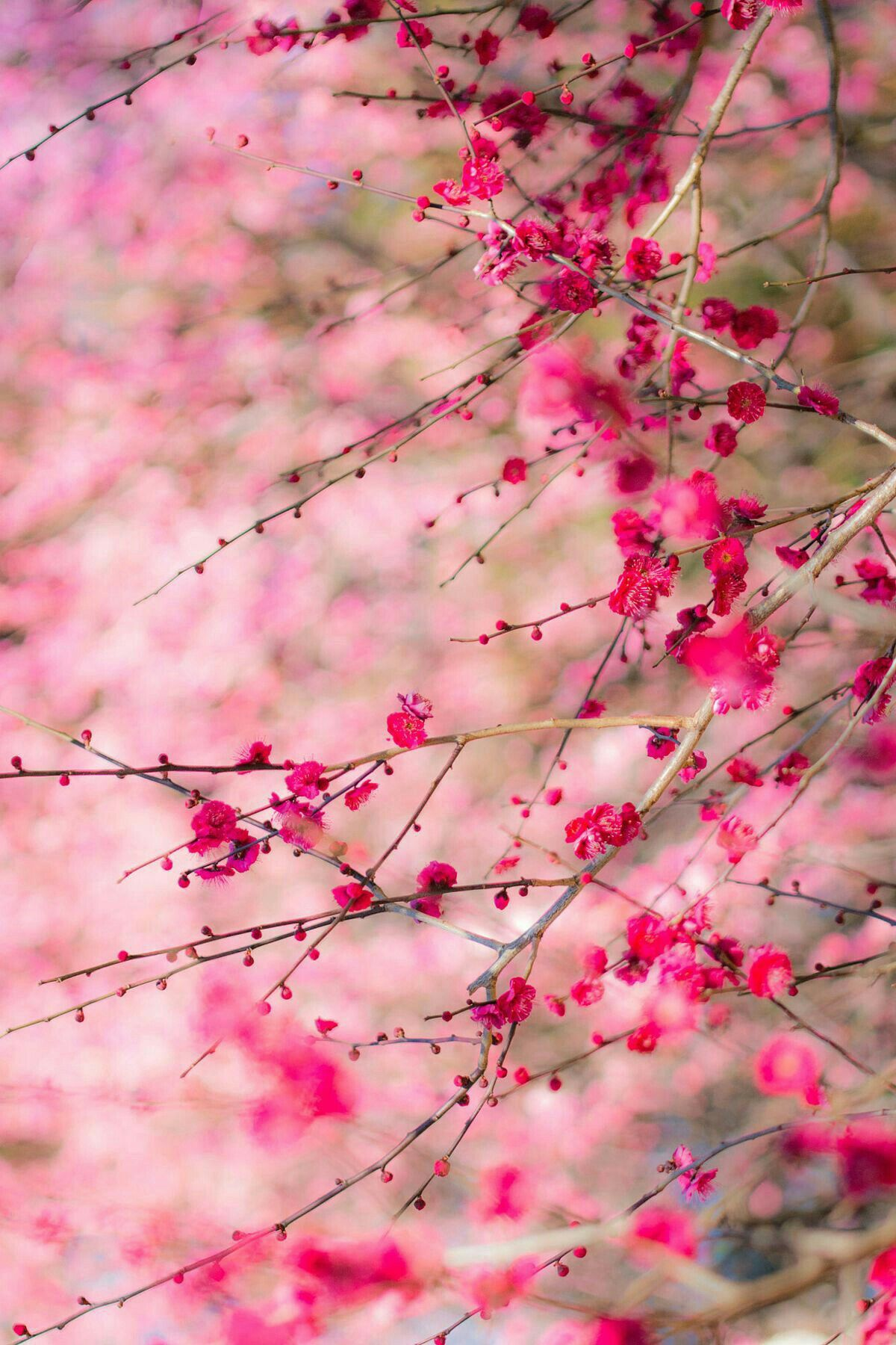 Pin By Tania Mendoza On Flowers Nature Photography Beautiful Flowers Wallpapers Beautiful Nature Wallpaper