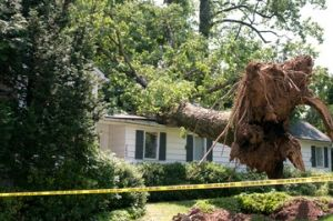 Monster Tree Services Tree Company Things To Come Alpharetta