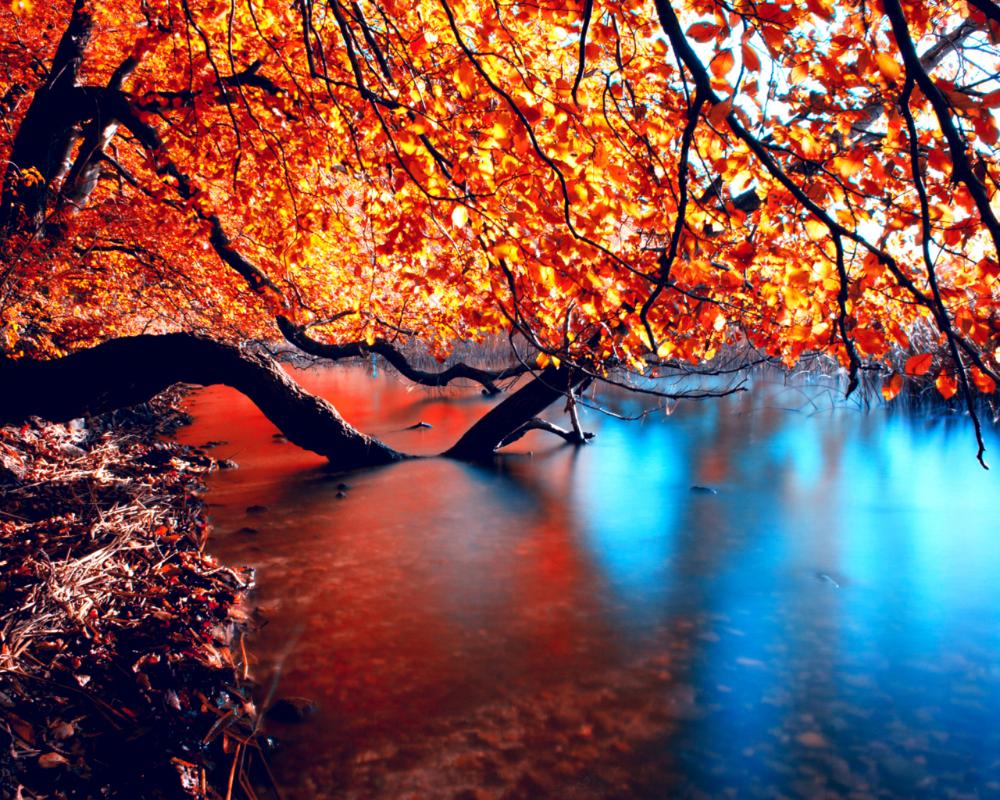 Обои для рабочего стола осень, река, дерево, листья ...