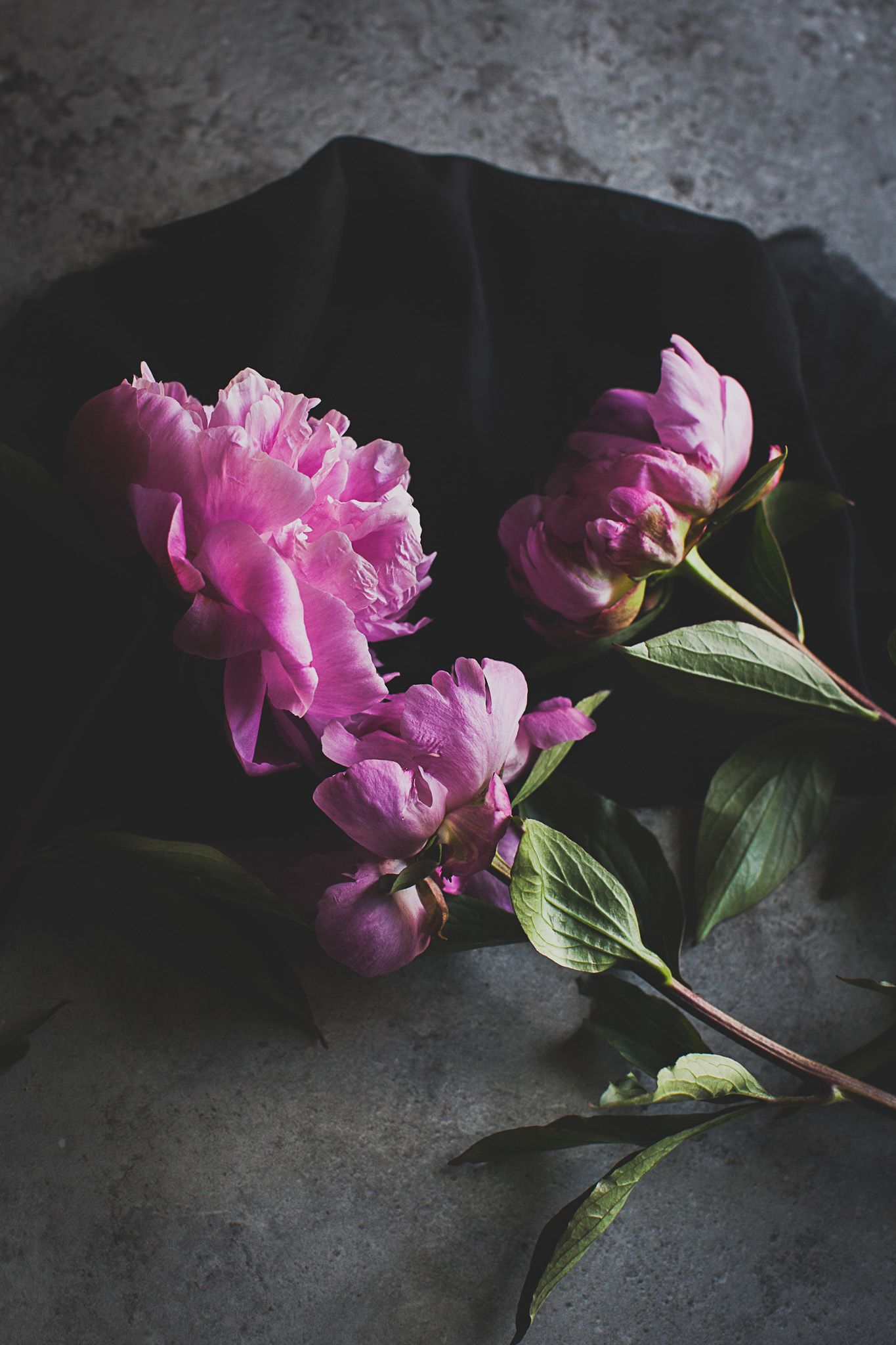 Peonies. Photography by Brighton photographer Emma Gutteridge