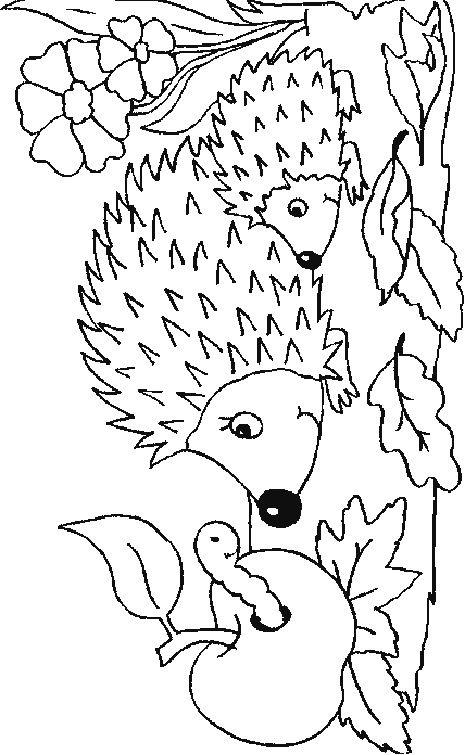 Ausmalbild Igeln - Igeln | Herbst | Pinterest | Ausmalbild igel ...