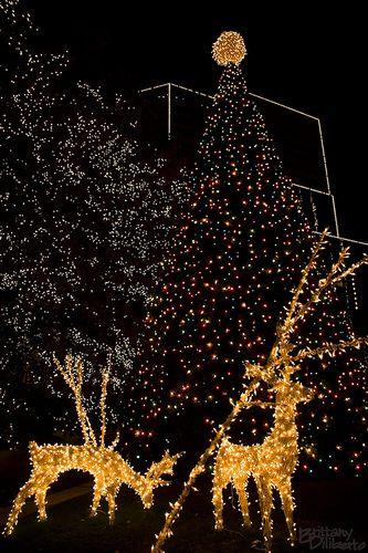 christmas in rva pinterest christmas lights lights and virginia