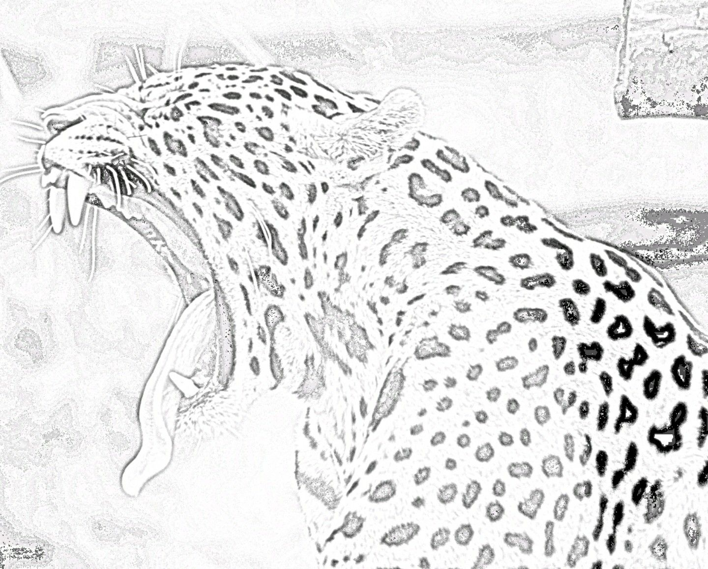 Pin By Color The World On Zoo Animal Coloring Pages Zoo Animal Coloring Pages Animal Coloring Pages Zoo Animals