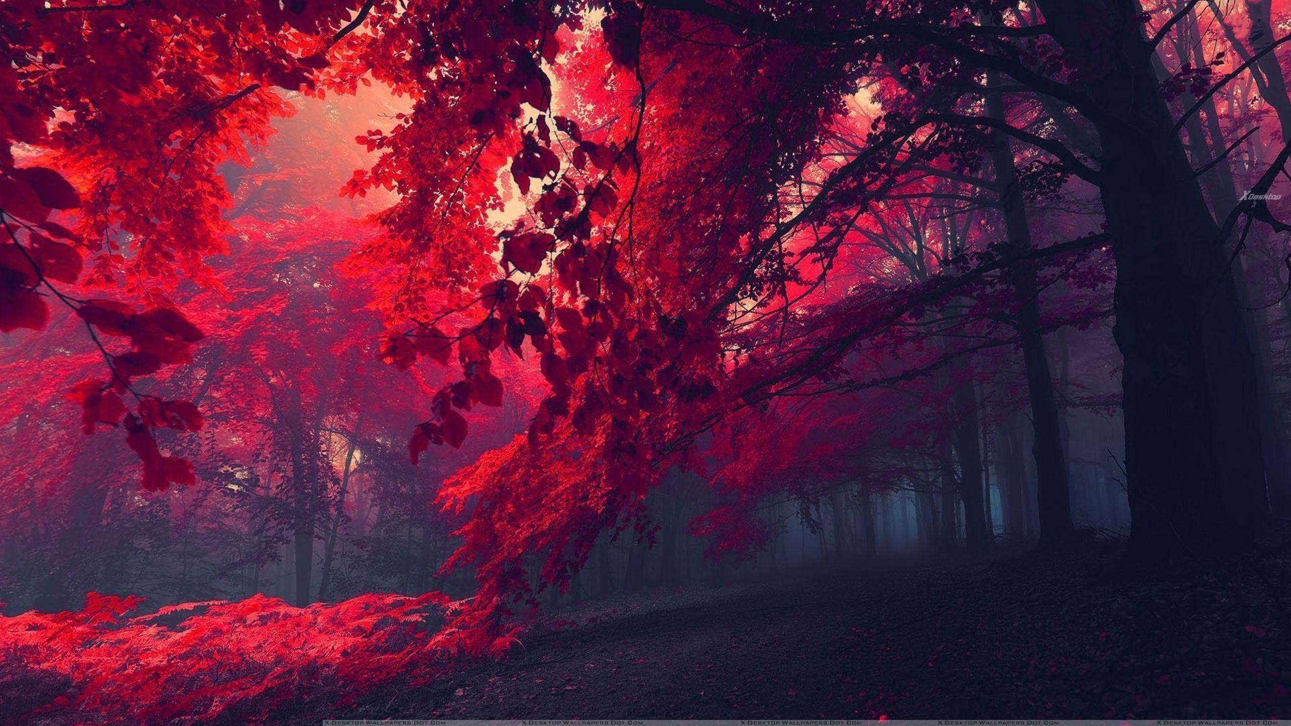 Wonderful 64 amazingly beautiful hd wallpaper for your for Beautiful wallpaper