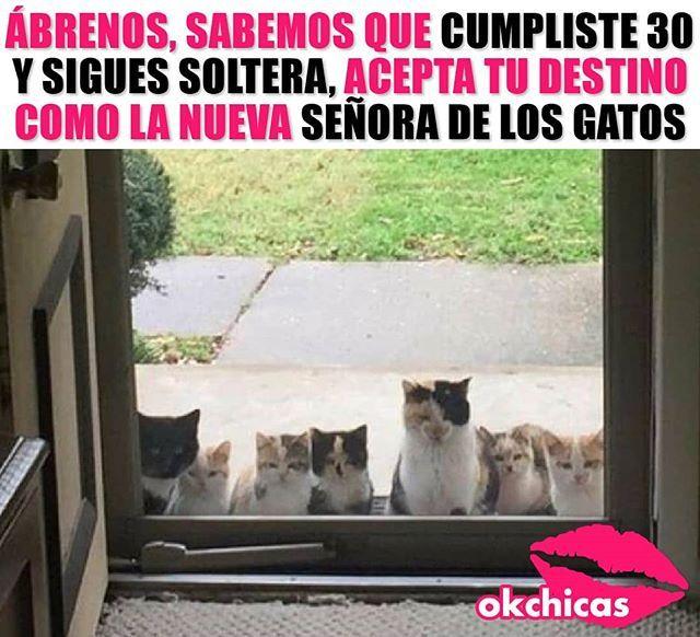 Sigueme En Pinterest Rodrigueitor22 Memes Frases Y Chistes Y Mucho Mas En Espanol Y En Ingles En Mensajes Y Comen Funny Spanish Memes Funny Memes Memes