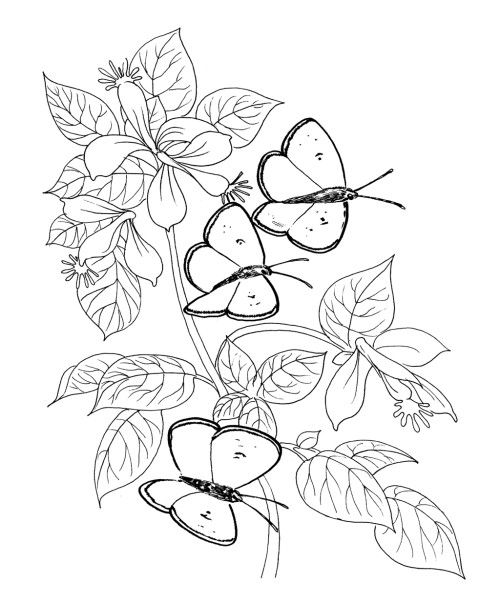 Three Butterfly And Flower Coloring Pages