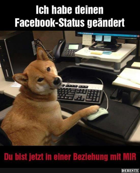 Besten Bilder Videos Und Spruche Und Es Kommen Taglich Neue Lustige Facebook Bilder Auf Debes Susse Hunde Und Katzen Lustige Bilder Von Tieren Gluckliche Tiere