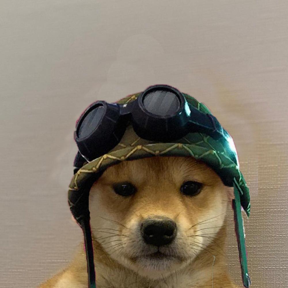 Visartheking Visar0507 Twitter Dog Icon Gamer Pics Animal Memes