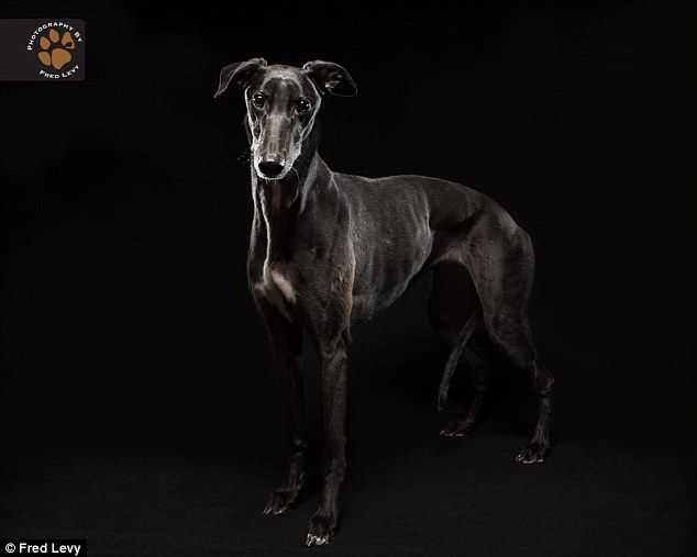 Stigmatized: Sadly for many of them in shelters, black dogs are commonly used in books and movies to signify evil and darkness
