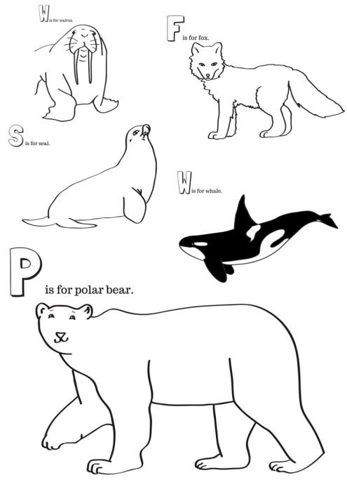 Arctic Animals Printable Coloring Pages | Arctic animals, 100 free ...