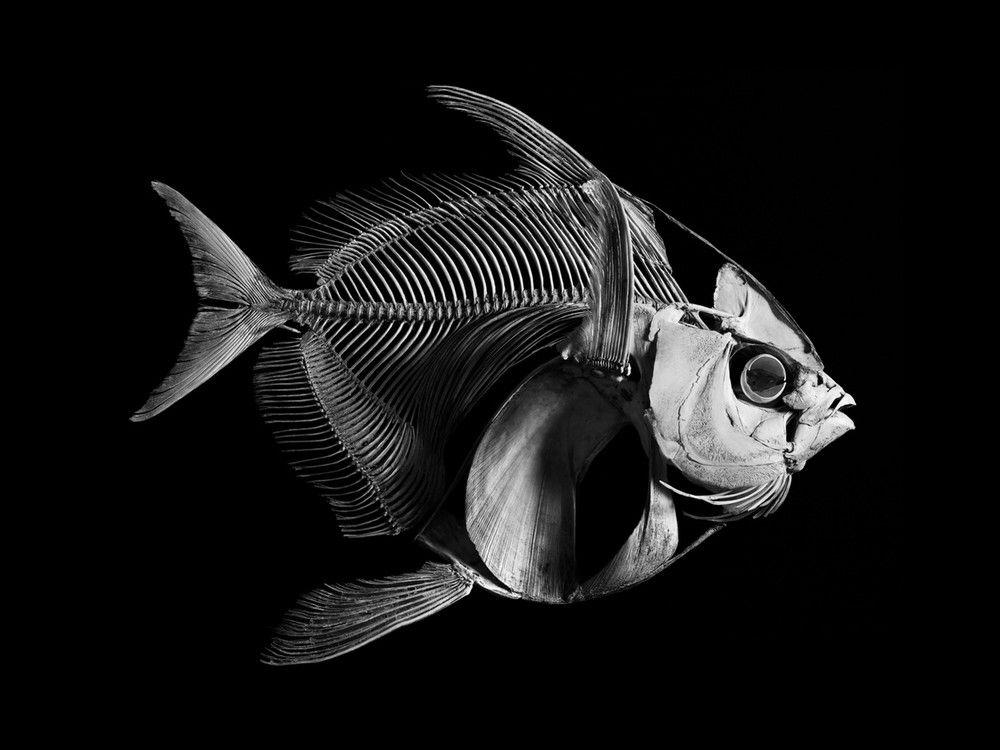 Evolution - Patrick Gries | Interesting Facts | Pinterest | Huesos ...