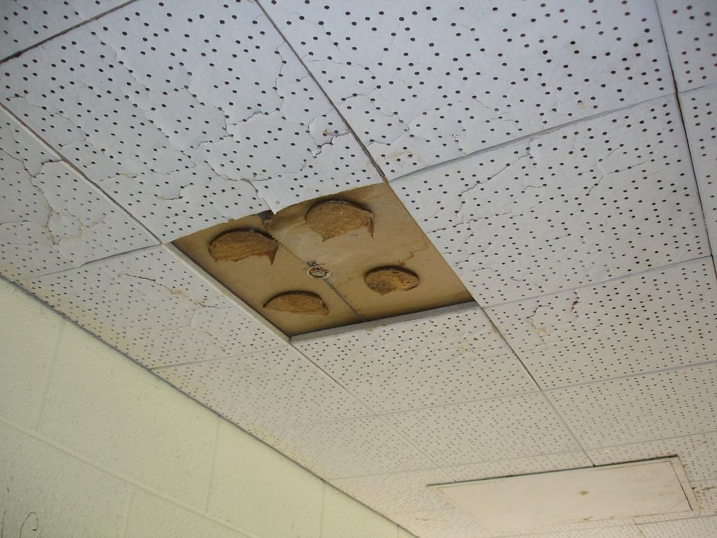 Cover Asbestos Ceiling Tiles Httpcreativechairsandtables