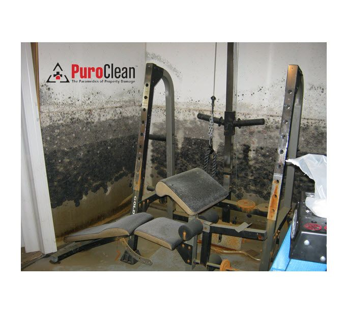 Basement mold removal mt laurel new jersey mold remediation when greater philadelphia and southern new jersey region homes need basement mold removal dont contaminate your whole home by trying to do it yourself solutioingenieria Choice Image