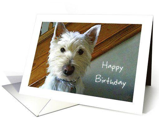 Westie Dog Is Looking At You Hey Happy Birthday Card Happy