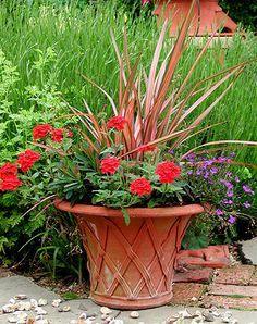 Pink striped cordyline, fanflower, red geraniums