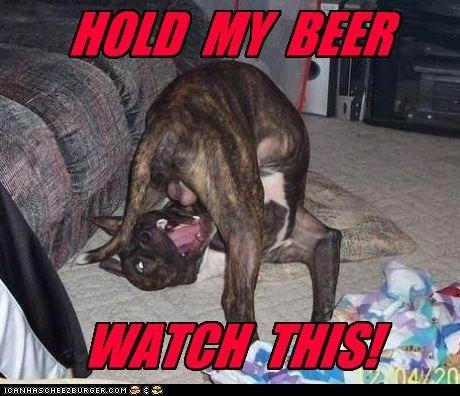 1083a81897242cab8dbe4af7f44c3f71 redneck dog red neck dogs pinterest ghillie suit and dog