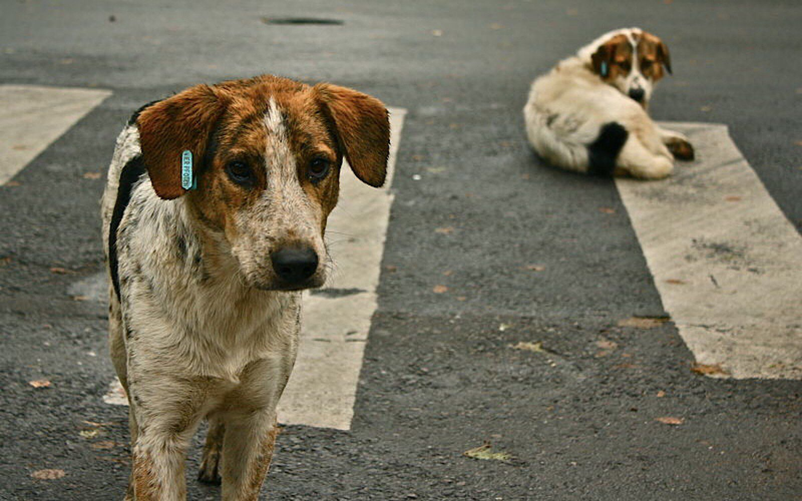 How Organizations Are Working To Help The World S Estimated 200 Million Stray Dogs Street Dogs Dogs Chinese Dog